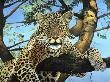 Daytime Hang by Doni Kendig Limited Edition Print